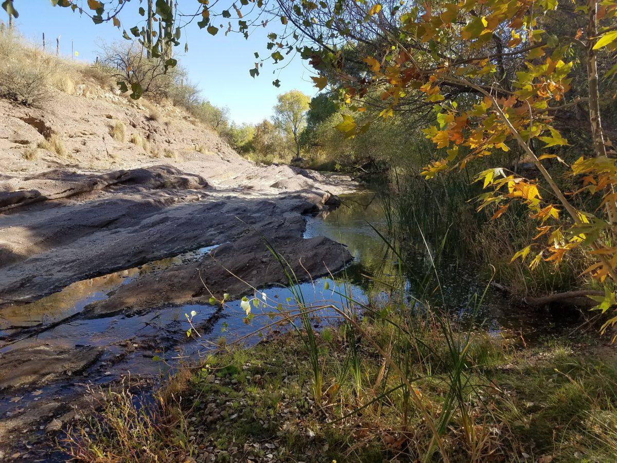 Photo of habitat in Sabino Creek.